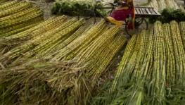 Sugarcane Juice: UP Govt's Solution on Arrears Worth Rs 19,000 Crore?
