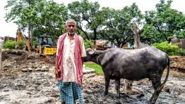 traditional dairy farmers in bihar