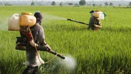 Brazil approved more new pesticides
