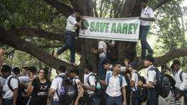 Bombay HC Bars Tree Felling in Aarey