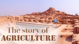 How did Agriculture Begin in South Asia?