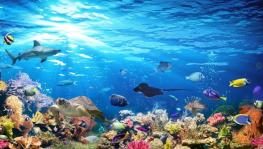 Ocean Acidification can Cause Mass