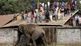 Human elephant conflict in India