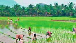 Tamil Nadu: Farmers Wait for Days