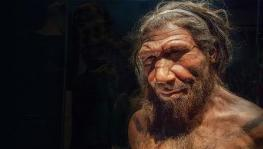 Neanderthal DNA in Africans Suggest Back