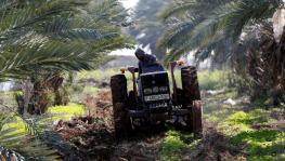 A Palestinian man uses a tractor to plow a field in the village of Al-Jiftlik near Jericho.