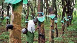 Arasu Rubber Plantation Workers