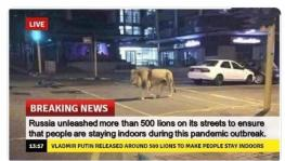 Russia lions on streets during coronavirus lockdown is fake news.