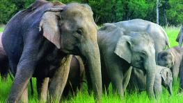 3 Wildlife Sanctuaries in Jharkhand
