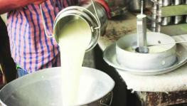Maharashtra: Amid COVID-19 Lockdown, Farmers Selling Milk Face Losses