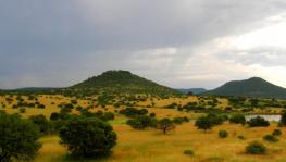 African Savanna. Image Courtesy: Wikimedia Commons.