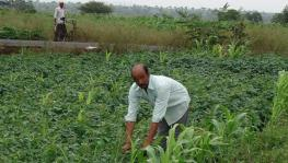 Organic Farming to Bring Holistic Growth