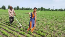 Madhya Pradesh: Mother India Comes to Life in Ratlam, Farmer's Daughter Pushes Plough