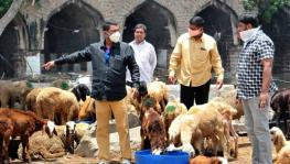 Bakrid: Animal Traders Seek Compensation from Maha Govt for Losses
