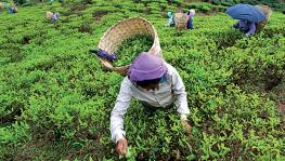 COVID-19: Amid Compounded Woes, Tea Workers' Unions Prepare to 'Strike Back'