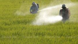 Fertilisers and Pesticides Replace Fossil Fuels as Largest Source of Sulfur in Environment by Human Activity