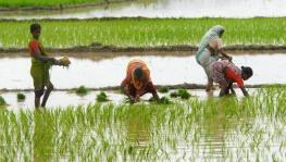 Kerala to Strengthen Farmers' Collectives to Counter 'Corporate-Friendly Farm Reforms'