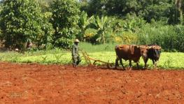 Cuba's Big New Hope For Farmers and Environment