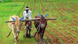 Rajasthan Govt Introduces 3 Bills to Negate Impact of Centre's Farm Laws