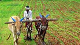 Kerala Introduces Base Price for 16 Agricultural Produce
