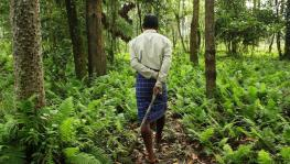 Planning on Privatising Forests, Activists Opposed to Move