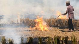 'Farmers Not Solely Responsible for Pollution': BKU Condemns Stubble Burning Arrests
