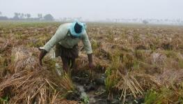 Cyclone Burevi: Continuous Rainfall Damages Paddy and Sugarcane Crops in Delta Districts