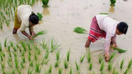 Union Budget 2021-22 Shows a Drop in Expenditure on Agricultural Schemes