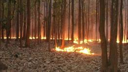 Forest Fires in North India: A Man-Made Disaster