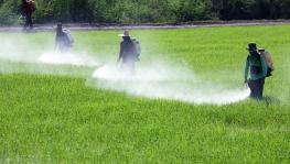 Study Says 64% of World's Farmland at Risk of Pesticide Pollution