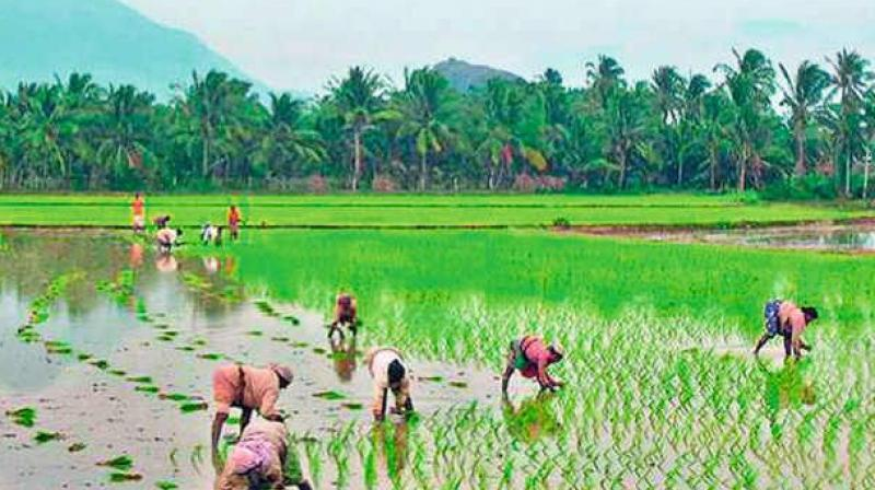 Farmers Not Prepared for Telangana's New