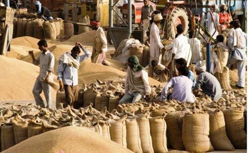 Madhya pradesh doubled wheat procurement despite lockdown decoded