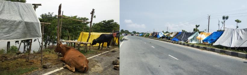 Cattle and Families stranded roadside due to flood in East Champaran.